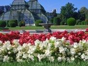 Wir haben Blumen im Park Schönbrunn fotografiert